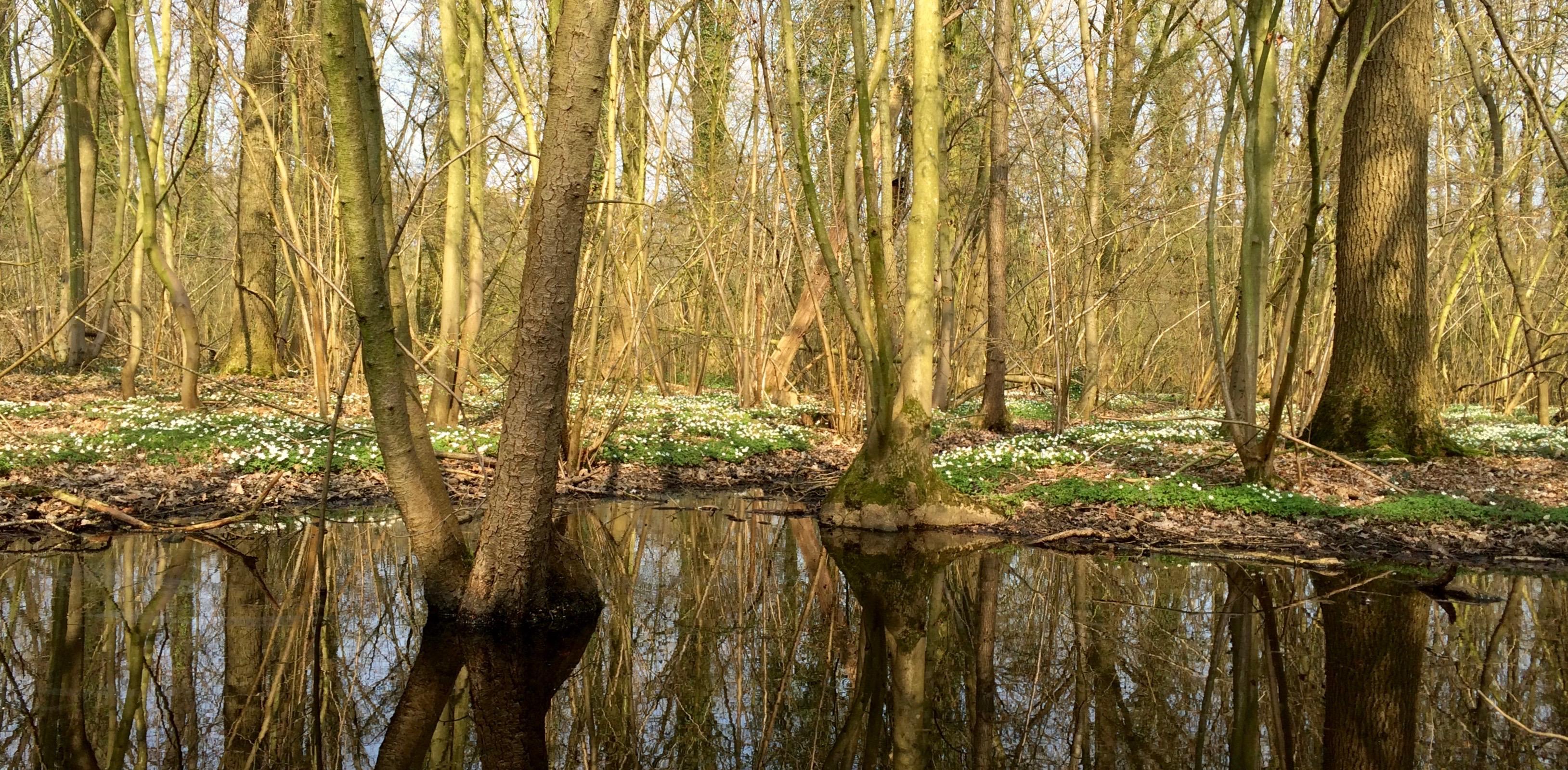 Natuurgebied Vorte Bossen breidt uit langs de Pachtebeek in Doomkerke