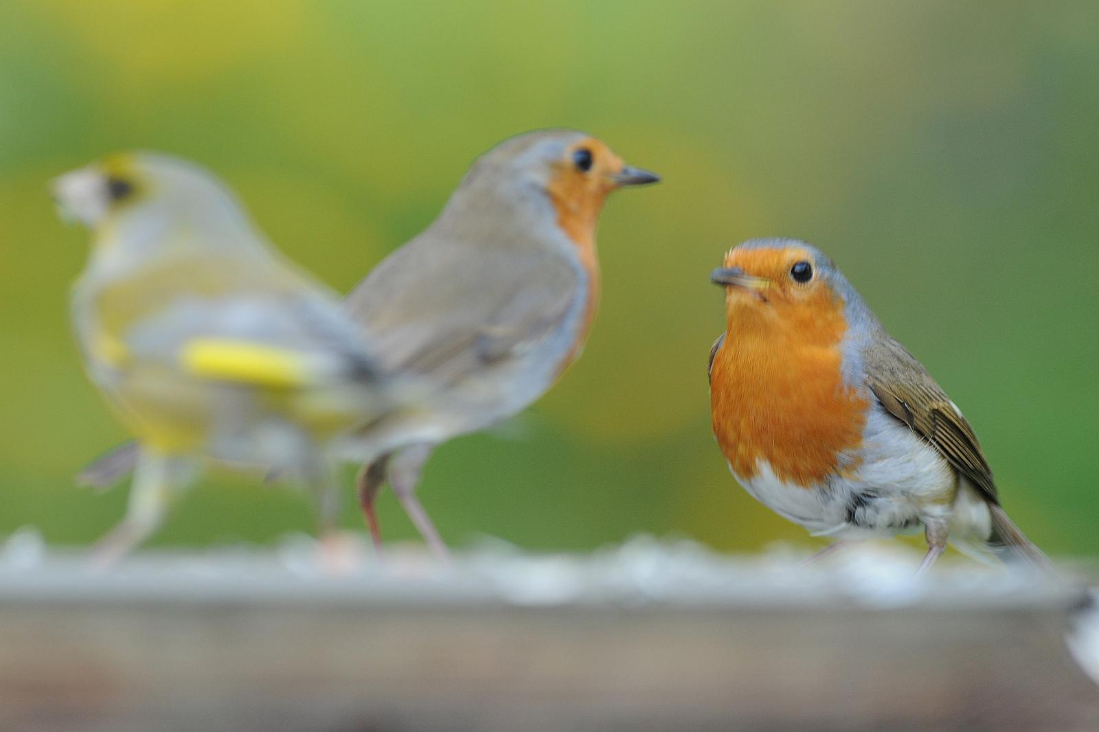 Grote vogelweekend Natuurpunt: 27 en 28 januari 2018