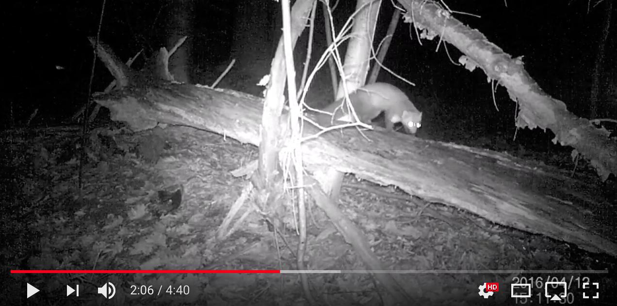 Wildcamera's in de Vagevuurbossen
