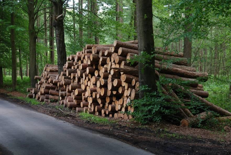 Bomen kappen voor een beter bos?